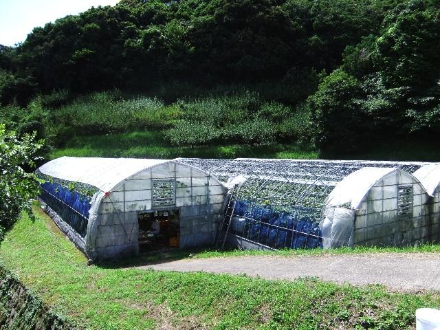 福薗勉農園DSCF0344
