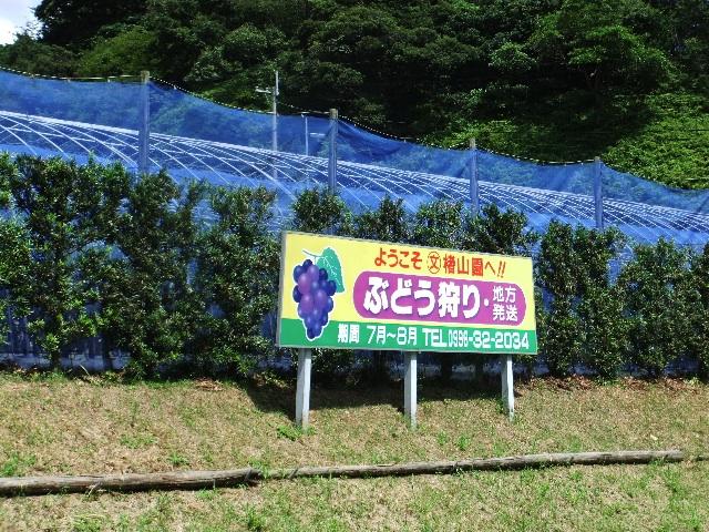 楮山文二農園DSCF0334