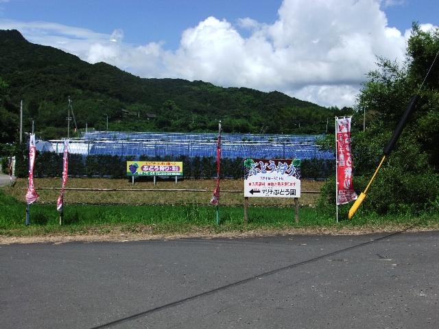 楮山マリ子農園DSCF0346