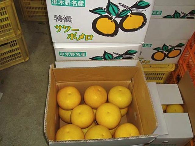 nishi-kajyuen-004