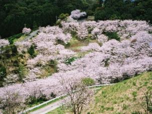 観音ケ池市民の森(桜)㈭