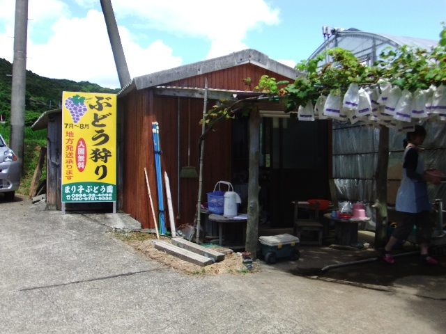 楮山マリ子農園DSCF0339